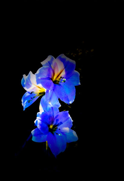 Royal Lillies by Sodium Light  - a Photographic Art Artowrk by Ruthie