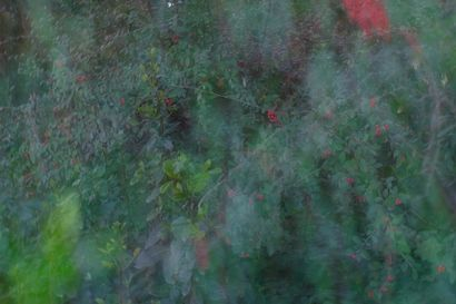 Green Vision of Red - A Photographic Art Artwork by Luca Fiore