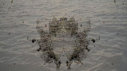 Drop in the Ocean ~ Plankton - A Video Art Artwork by Tal Eshed