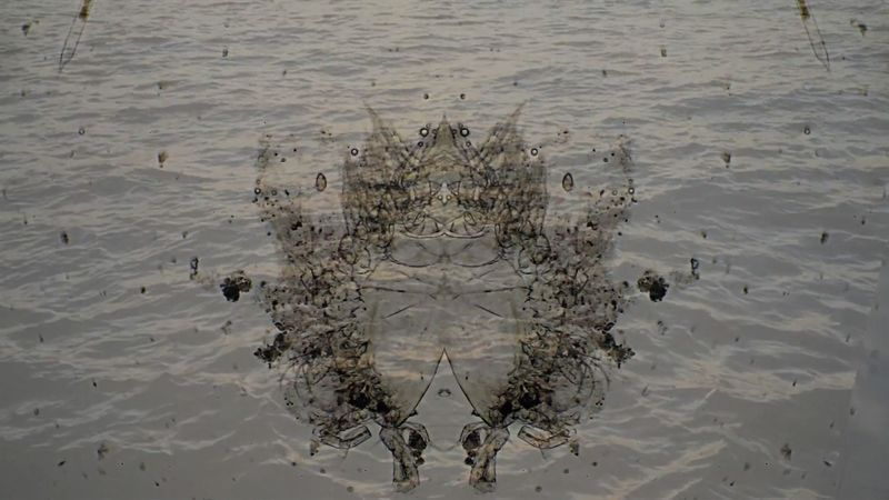 Drop in the Ocean ~ Plankton - a Video Art by Tal Eshed