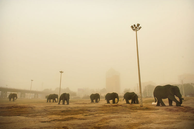 elephen - a Photographic Art by meead akhi