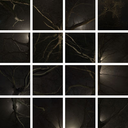 #2 Limbs, or the Discontinuos Structure of Matter - a Photographic Art Artowrk by Gabriela Torres Ruiz