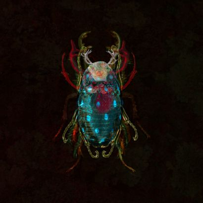 Insect II - A Digital Graphics and Cartoon Artwork by Peter Arnell