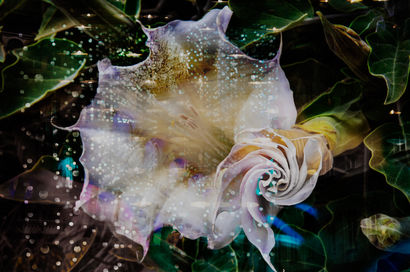Sacred datura and candles and lights - a Digital Art Artowrk by Katalin